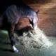 Dalle pour chevaux - Hexdalle® DJP